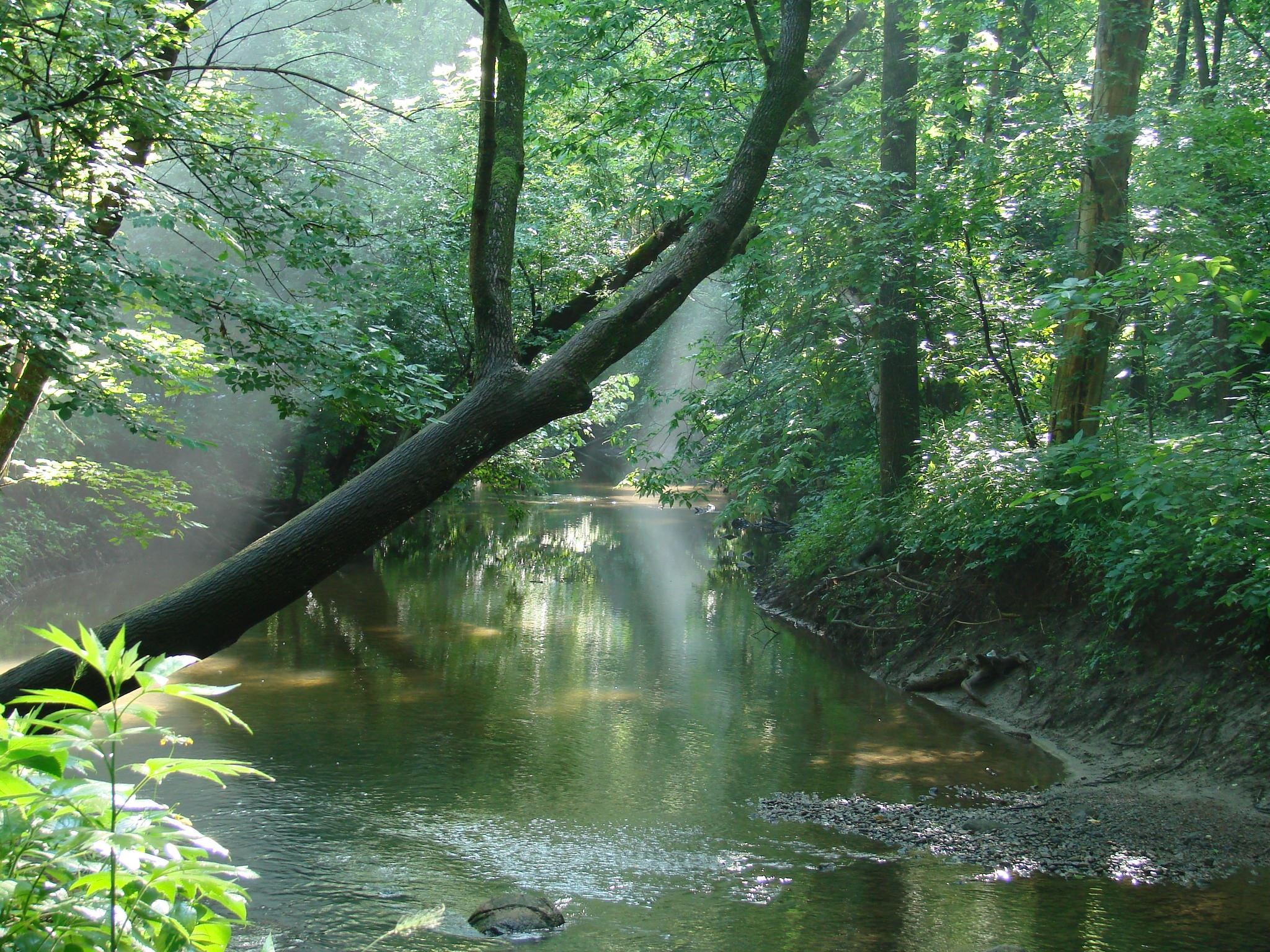 Cool Creek with tree landscape